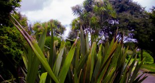 Head-height leaves at Grey Lynn Park, Auckland