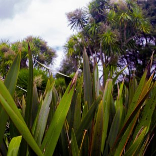Head-height leaves at Grey Lynn Park, Auckland