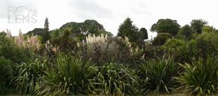 Border planting at Onepoto Domain, Auckland