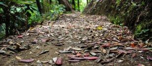 Leaf fall in Karekare