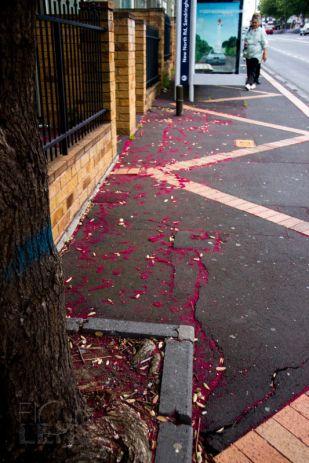 Pohutukawa flower-fall