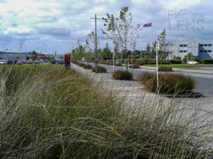 Urban underplanting