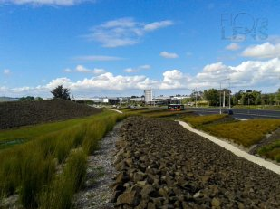 Mass planting by Auckland Airport, by James Lord