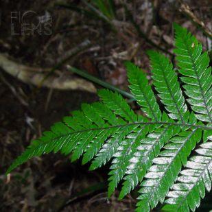 Glossy leaf detail
