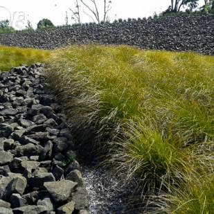 Visual contrast planting