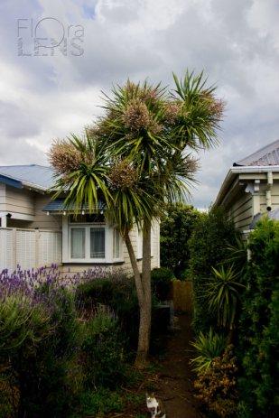 A Kiwi yard
