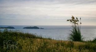 Lone teotoe at Cape Reinga