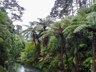 Oakley Creek