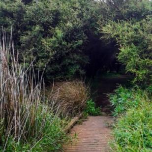 Manuka tunnel
