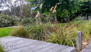 Raingarden Planting